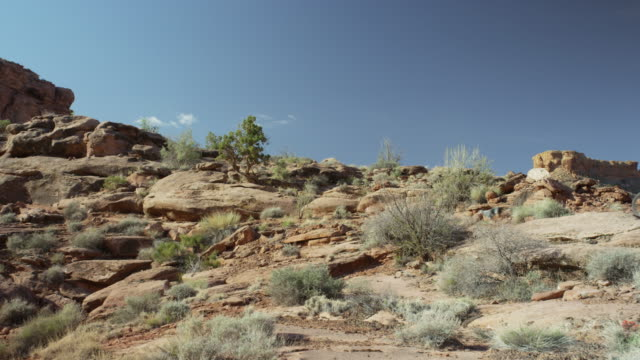 Wide panning shot of dog running with mountain bike / Moab, Utah, United States