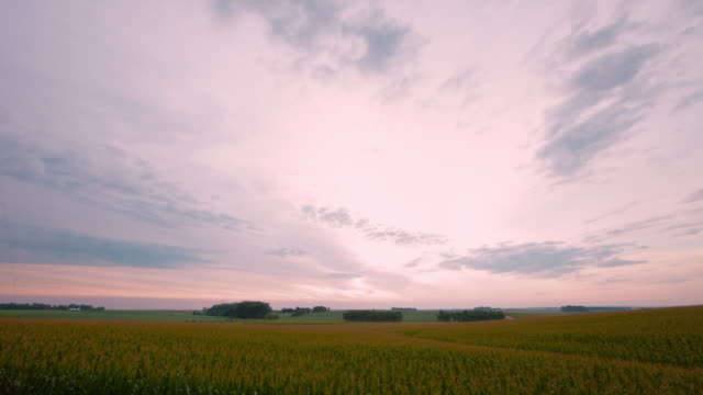 Wide rural agricultural landscape in the early morning; beautiful clouds and a field of corn.