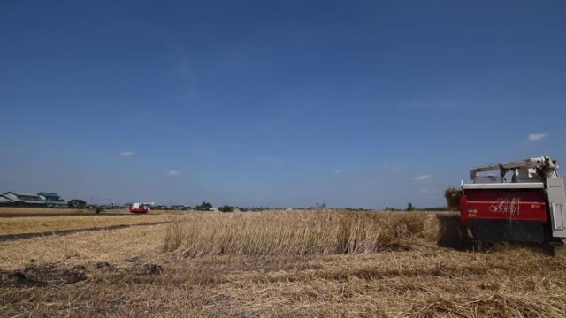 Wide shot a farmer harvests wheat with a Yanmar Co combine harvester in Chiyoda Town Gunma Prefecture Japan