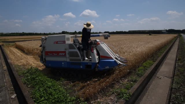 Wide shot a farmer harvests wheat with an Iseki Co combine harvester in Chiyoda Town Gunma Prefecture Japan