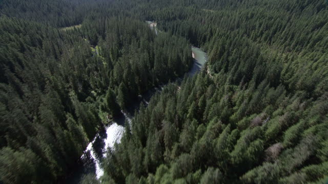 'Wide Shot aerial push-in-River winds through evergreen forest. / Alaska, USA'