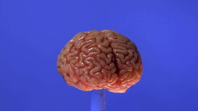 Wide shot brain rotating with blue background