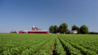 Wide shot exterior of barn and farmhouse with crops in foreground