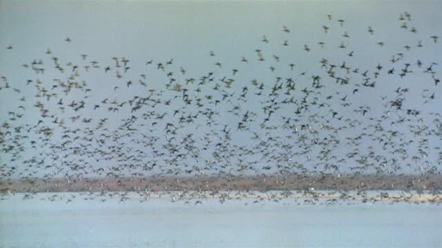 Wide shot flock of birds talking off from water / Spain