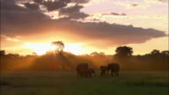 Wide shot herd of elephants standing in field at sunset / safari vehicle driving by in background /Masai Mara,Kenya