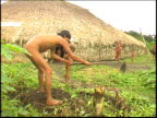 A wide shot of a Yanomami Indian man hoeing outside of a traditional Maloca dwelling in the Amazon
