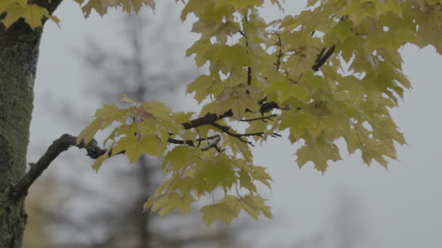 Wide shot of leaves swaying in the wind at Lake Hood