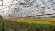 Wide shot of the interior of the greenhouse with flowers inside.