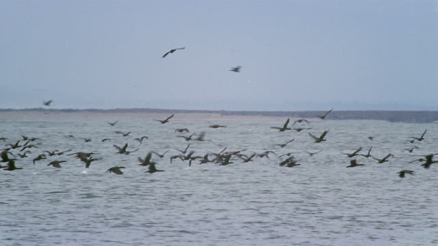 Wide shot pan Birds flying over lake in Fort Canby State Park on Cape Disappointment / Pacific County, Washington, USA