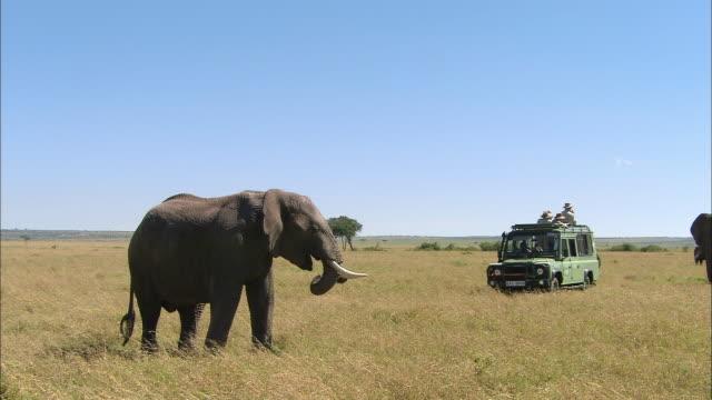 Wide shot safari vehicle full of people observing elephant against clear blue sky / Masai Mara, Kenya
