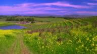 wide shot PAN small lake + vineyards / Napa Valley, California