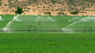 Wide shot sprinklers irrigating field on alfalfa farm / cars passing in background / California