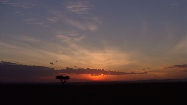 Wide shot sunset landscape with acacia tree / Kenya, Africa