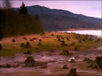wide shot PAN of tree stumps along edge of Alder Lake (deforestation) / Washington