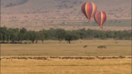 Wide shot two hot air balloons floating over African landscape with herd of wildebeests / Masai Mara, Kenya