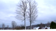Wide shot two tall trees changing through four seasons / Vermont