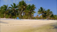 Wide shot wind blowing palm trees on Caribbean beach / people lying in lounge chairs in background / Belize