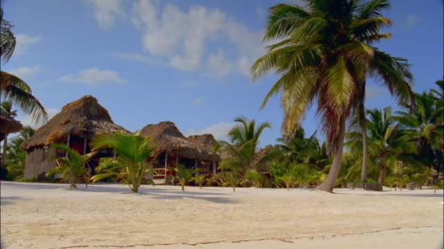 Wide shot wind blowing palms in front of grass huts on beach / Ambergris Caye, Belize