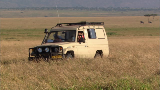 Wide shot woman looking with binoculars out of safari vehicle as lioness walks by / Masai Mara, Kenya