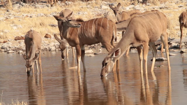 'Wild animals drinking at a waterhole in Etosha National Park, Namibia.'