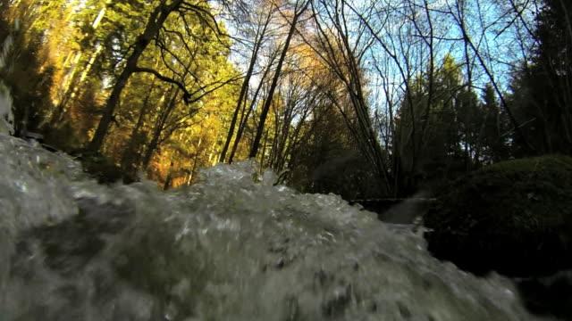 HD Wild forest river POV
