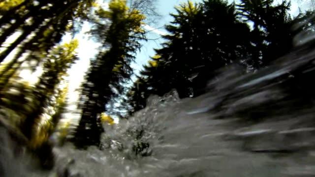 POV Wild Forest River