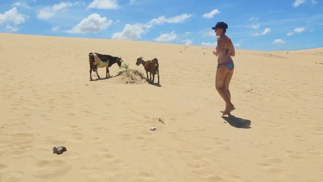 Wild goats grazing between the sand dunes in the paradise island of Fuerteventura with traveler woman contemplating during a sunny day.