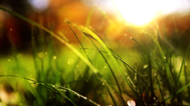 Wild grass with shiny rays