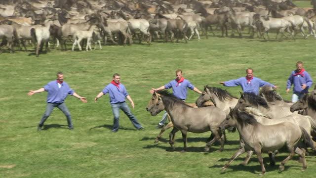 MS Wild horse race at Meerfelder Bruch / Dulmen, North Rhine Westphalia, Germany