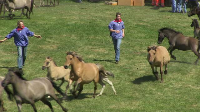 MS TS Wild horse race at Meerfelder Bruch / Dulmen, North Rhine Westphalia, Germany