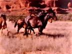 Cavalli selvaggi in movimento lento