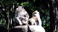 Wild Macaque Monkey (Macaca fascicularis) Family with Infants