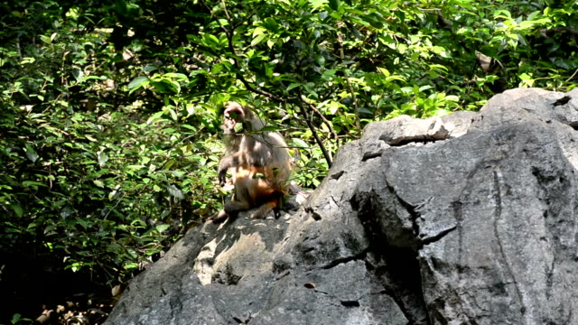 Wild macaque of daily life-Female monkey and baby