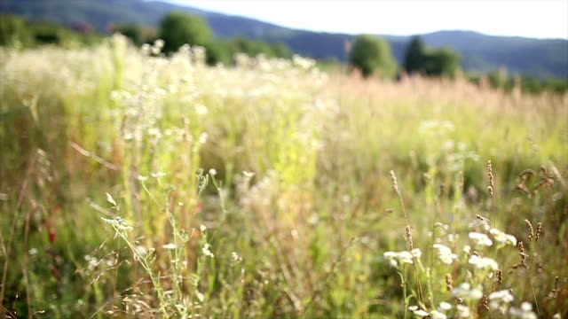 Wild meadow in the summer