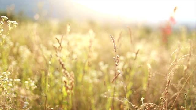 Wilde Wiese im Sommer