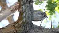 HD wild owl sitting in a tree vertical