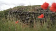 Wild poppies blow in the wind in the 'Trench of Death' a preserved Belgian World War One trench system on July 14 2017 in Diksmuide Belgium