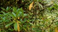 Wild rhododendron forest 2 Mirror Lake Mt. Hood Oregon Cascades 2