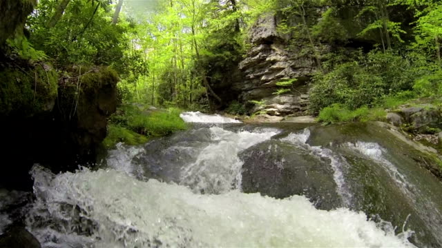 Wild river in the forest