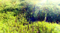 Wildflower aerial with lens flare over an uncultivated meadow