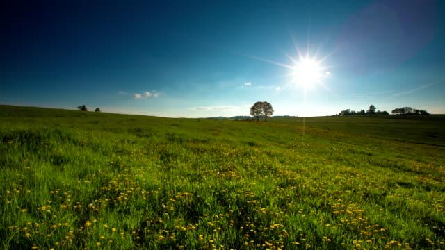 CRANE DOWN: Wildflower Field