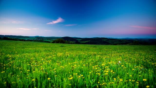 CRANE UP: Wildflower Meadow