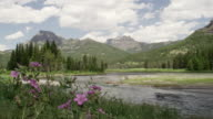 Wildflowers and river in Yellowstone national park