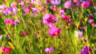 Wildflowers in the wind. Uncultivated meadow