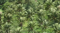 Wind among coconut palms plantation in French Polynesia