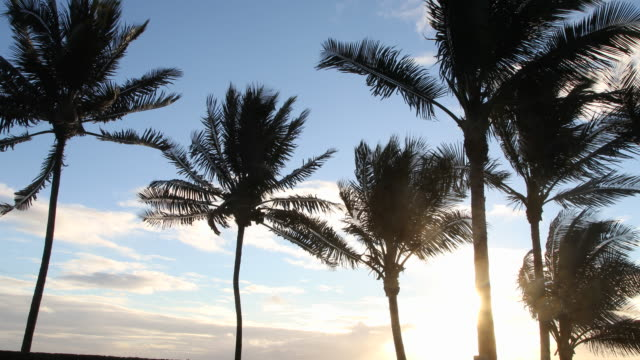 Wind blowing palm trees silhouetted against the sun.