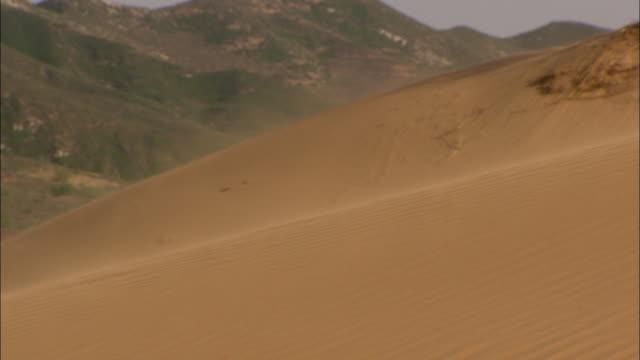 MS Wind blowing sand over desert dune, Longbaoshan Village, Hebei, China
