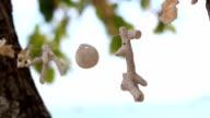 wind chimes seashell