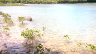 Wind Fresh Water Mangrove