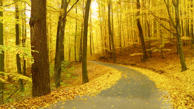 HD DOLLY: Winding Forest Road In Autumn